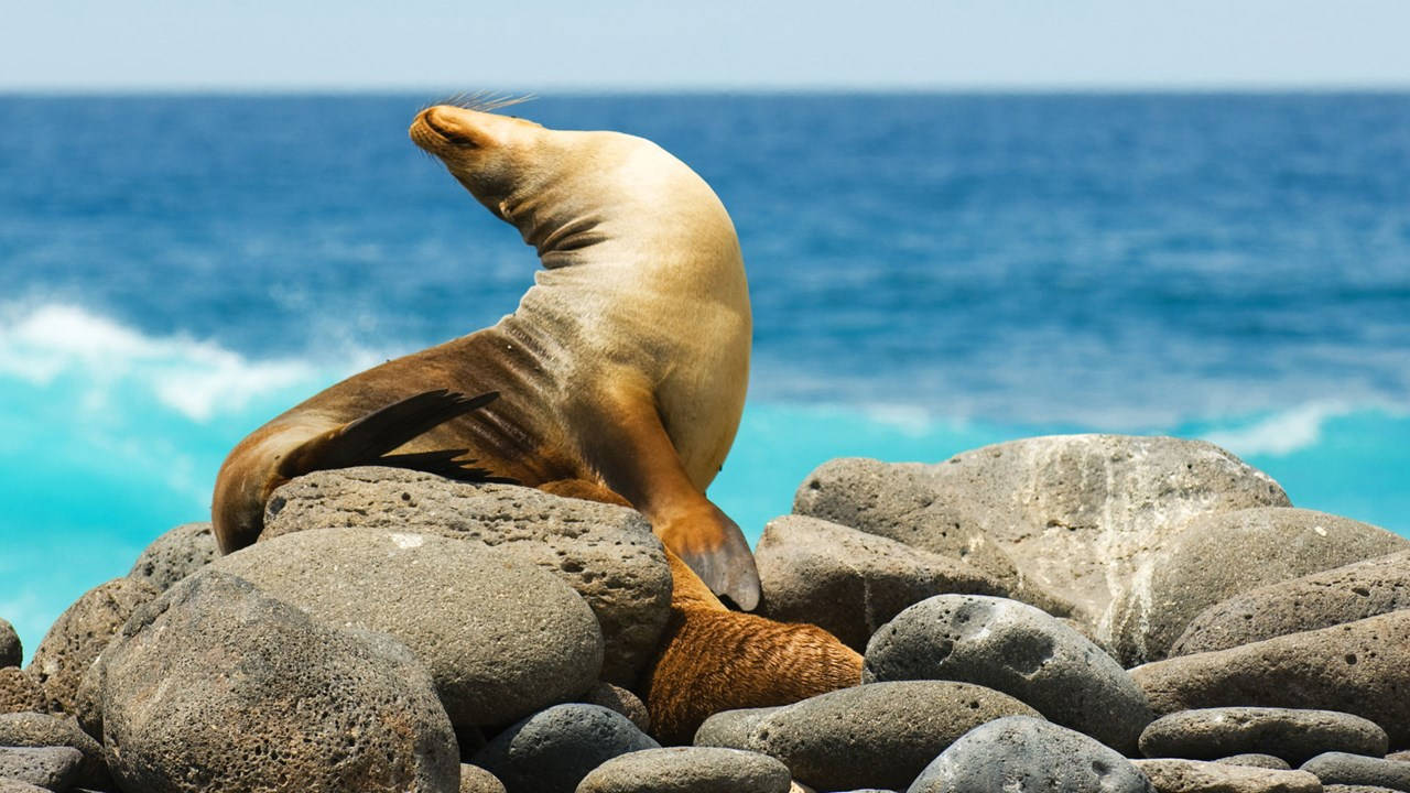 What to check off your bucket list: a trip to the Galapagos Islands!